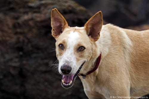хозяин бросился в драку, защищая своего пса от вы удивитесь, когда узнаете, кто душил собаку