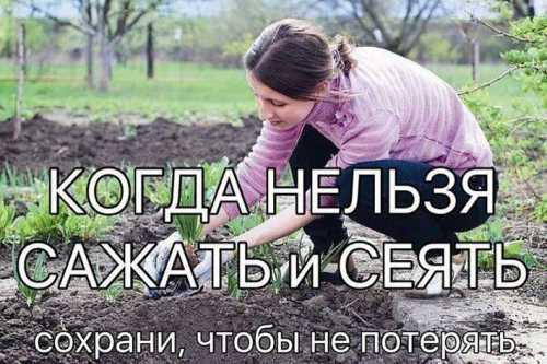 как сажать и правильно вырастить цветную капусту, чтобы получить богатый урожай
