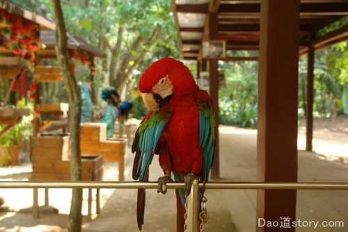 уникум: попугай невероятно чисто поёт сложную песню видео